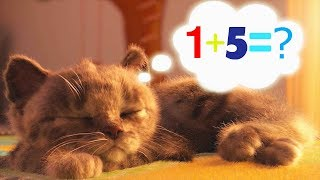 Little Kitten Preschool Adventure - Kitten Care School Fun Games - Early Learning Games for Kids