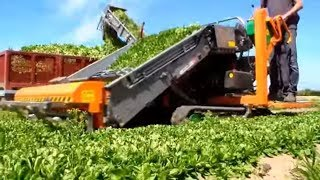 Amazing Agriculture Machine - Modern Technology Harvesting