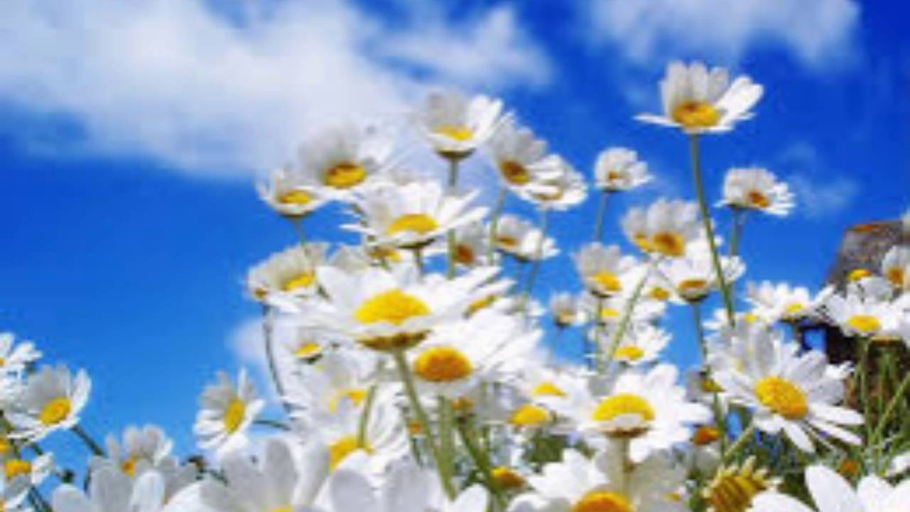 Lindo Paisaje de Flores - YouTube