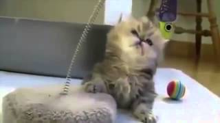 Приколы животные 2014! Awesome funny video animals, бесплатные приколы про собак, собака паук прикол