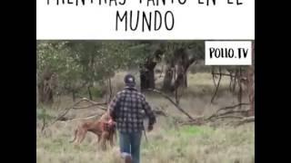 Hombre vs canguro