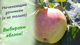 видео Домашняя яблоня