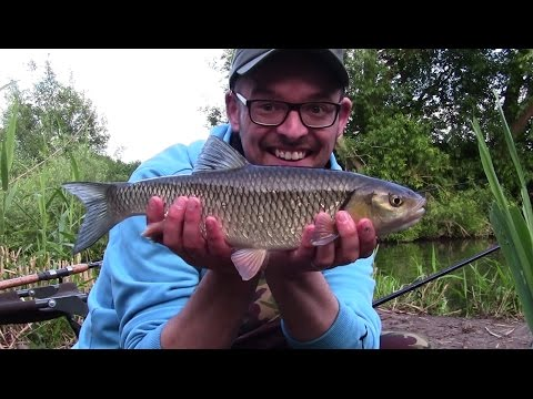 Chub, Bream And Trout On The Bristol Avon
