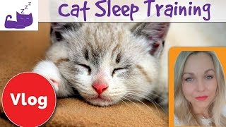 😼 How to train your cat to let you sleep 🐱  set a bedtime routine for your cat