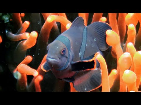 Most Beautiful Sea Anemones