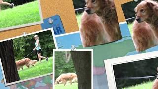 Aldens Kennels Dog Boarding River Forest, IL.