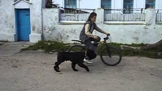 ROMAN-KOSH MANGUP HIS MAJESTY. Обучение.3. Велосипед