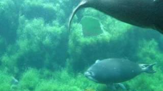 バイカルアザラシ 箱根園水族館 Baikal seals