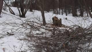 ЭКОСТАН. Вырубка лесов Ак-Тюза .Часть 3