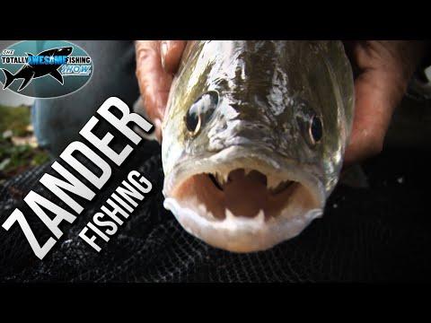 Zander Fishing With Light Sticks | TAFishing