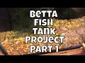 The Betta Project has begun How to setup a Betta Tank How to care for a Betta Fish Fish Room VLOG