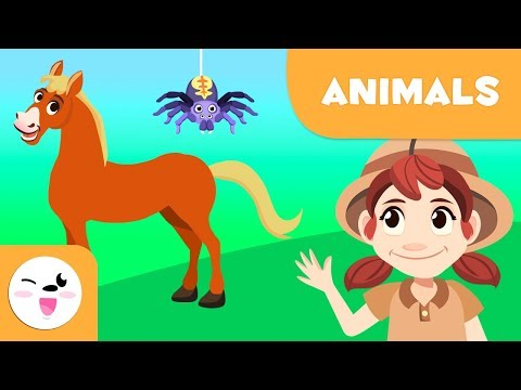 Vertebrate And Invertebrate Animals - Short Compilation - Mammals, Arthropods, Birds, Worms...