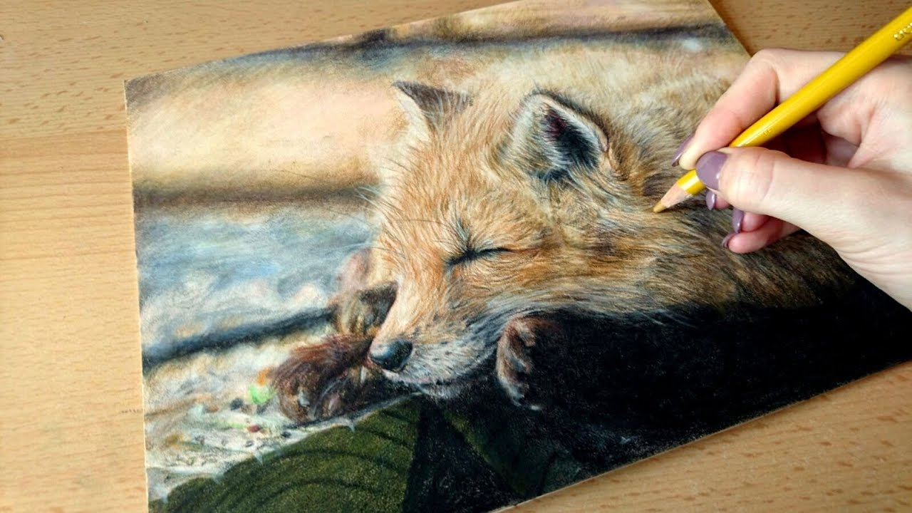 Colored Pencil Drawing Cute Fox Speed Draw Josymovies