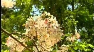 แจ้ ดนุพล - ดอกไม้ให้คุณ คาราโอเกะ