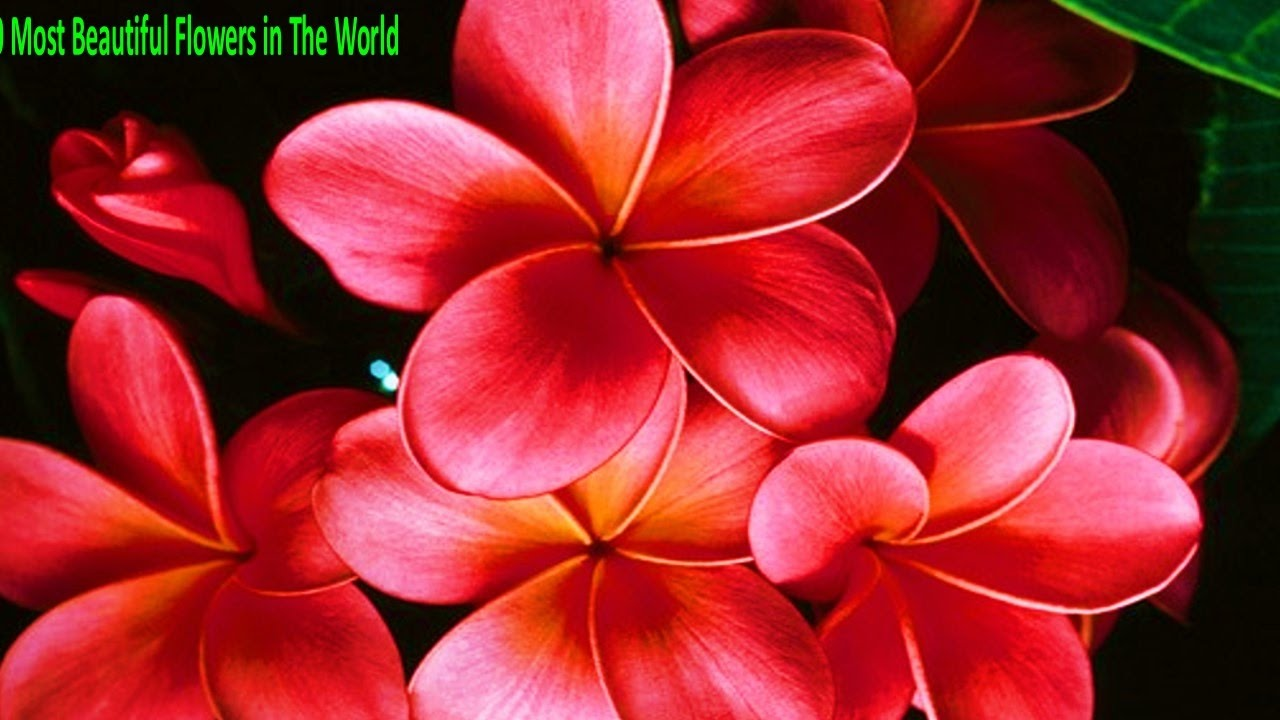 Top 10 Most Beautiful Flowers In The World Best Top 10 Most