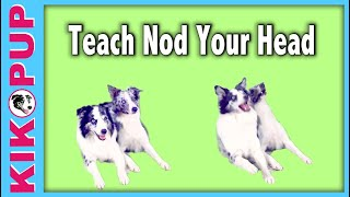 Teach your dog to NOD like Splash!