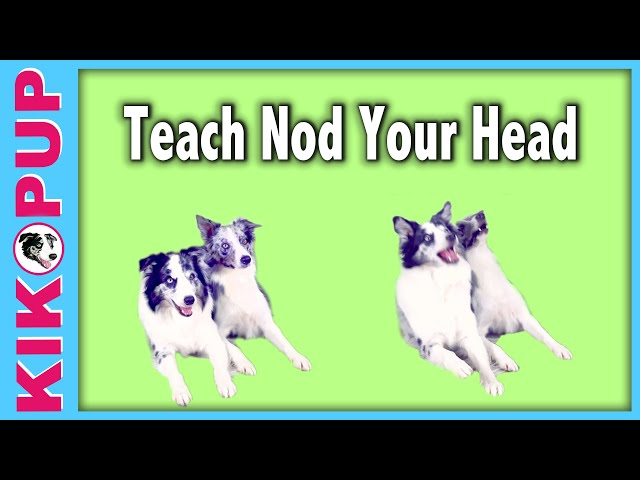 Teach your dog to NOD like Splash!  - Kikopup dog tricks training