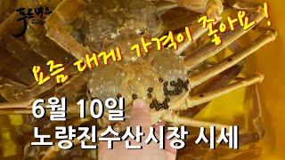 [최신시세정보] 대게 가격이 괜찮아요 ~ 오징어 엄청 싸요 !! 민어도 가격이 좋네요 ^^ ~   6월10일 노량진 수산시장