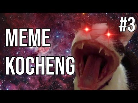 Kocheng Oren Bar Bar? Vs ANJING?! MEME KUCING #3