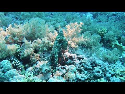 Oktopus in Action
