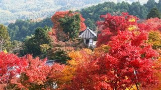京都 善峯寺の紅葉 Yoshiminedera Temple Kyoto Japan 【HD】美しい日本の風景 The Beautiful Scenery of Japan