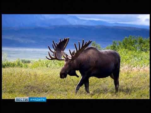 Сезон охоты на лося
