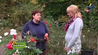 Ogród bez tajemnic ,, Jak przezimować rośliny kubłowe?''
