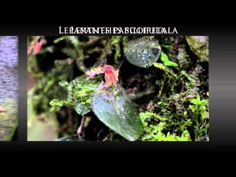 Guatemala: Orchids Wild Photo Tour
