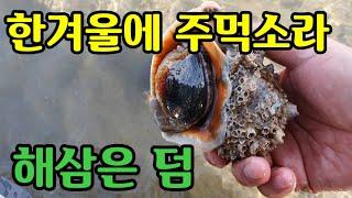 청포대 워킹 해루질  소라 해삼 대박