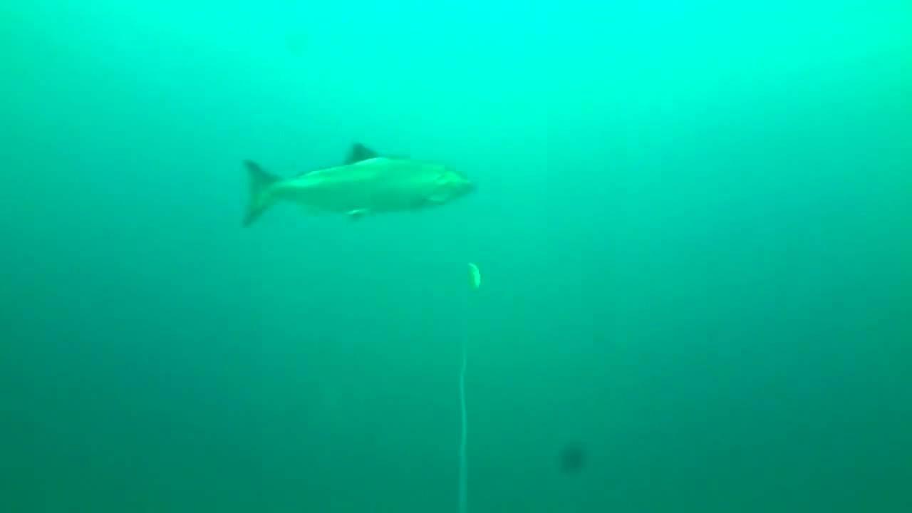 Lake Michigan Fishing Underwater Footage - YouTube