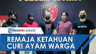 Polisi Tangkap Remaja 17 Tahun Yang Ketahuan Curi Ayam Di Palopo, Aksinya Terekam CCTV