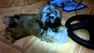 Repeat youtube video my dog :)