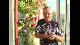 видео Вертикальный сад в квартире - те же живые стены из растений