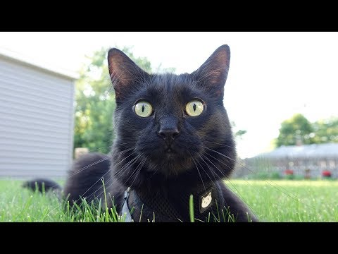 What Black Cats Think...