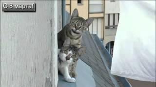 Мартовские коты поздравляют с 8 марта!