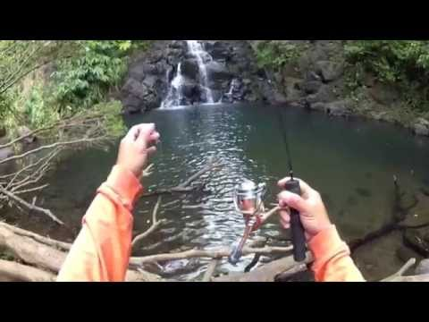 Fishing Hawaii's Beautiful Streams With A 2ft Pole And Campania Lures Hybrid.