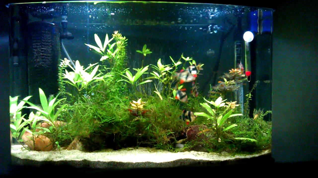 décoration aquarium tropical