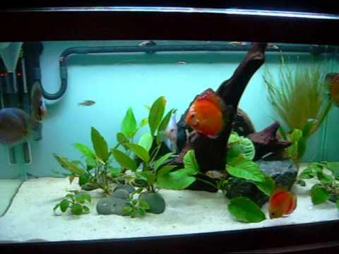 50g Discus Tank Youtube
