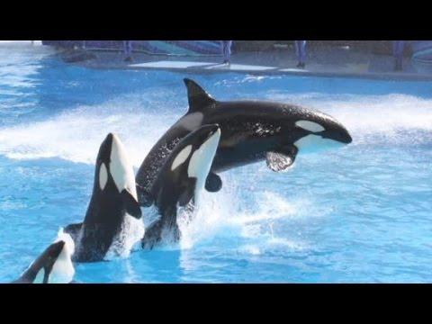 'Blackfish' Co-writer: SeaWorld Decision Is A ...