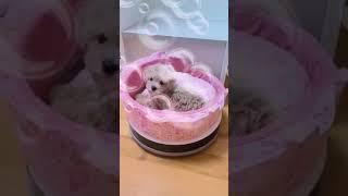 로봇청소기 위에있는 강아지