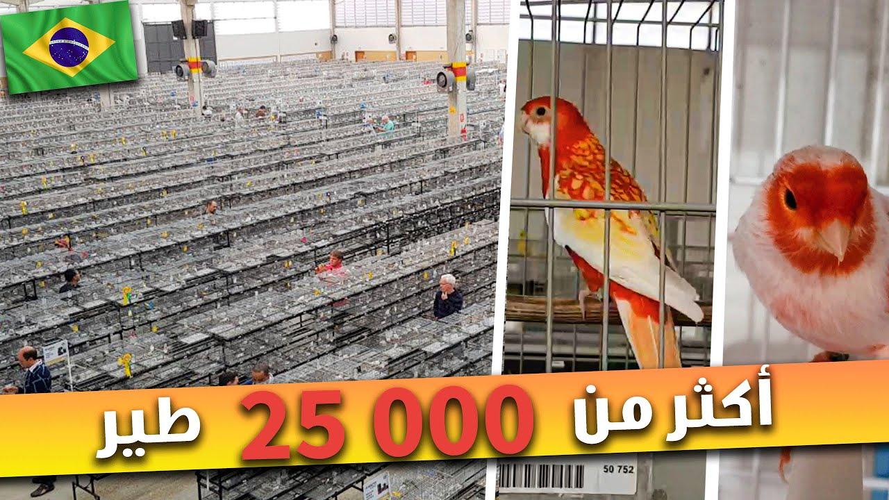 أكثر من 25000 طير 😱 في أضخم معرض للطيور بالعالم