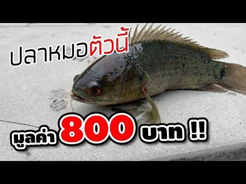 ท้าเด็กตกปลา ชนะให้ 800 บาท