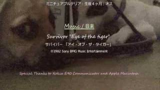 "[English] In the middle of Tokyo, a small puppy ""Pochichi"" is alway..."
