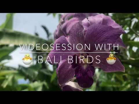 Bali Bird Videosession on Pool