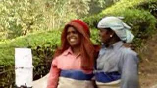India, Munar, Tea plantations, tea collectors