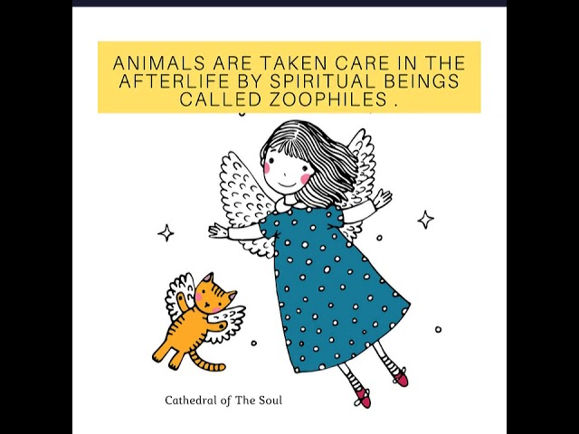 Do animals have guardian angels ?