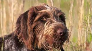 Ronnie Smith Kennels Bird Dogs