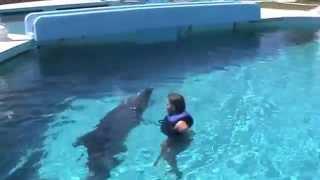 Плавание с дельфином. Selanya Seapark