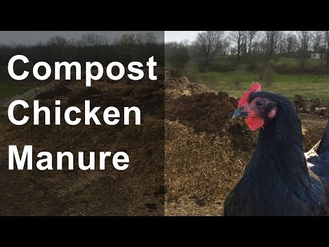 vlog: Composting Chicken Manure 4-29-2016