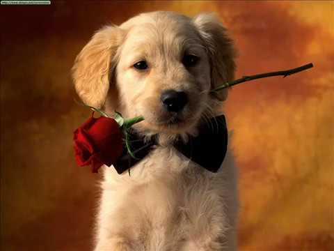 Cani i cuccioli pi belli del mondo youtube for I cani youtube